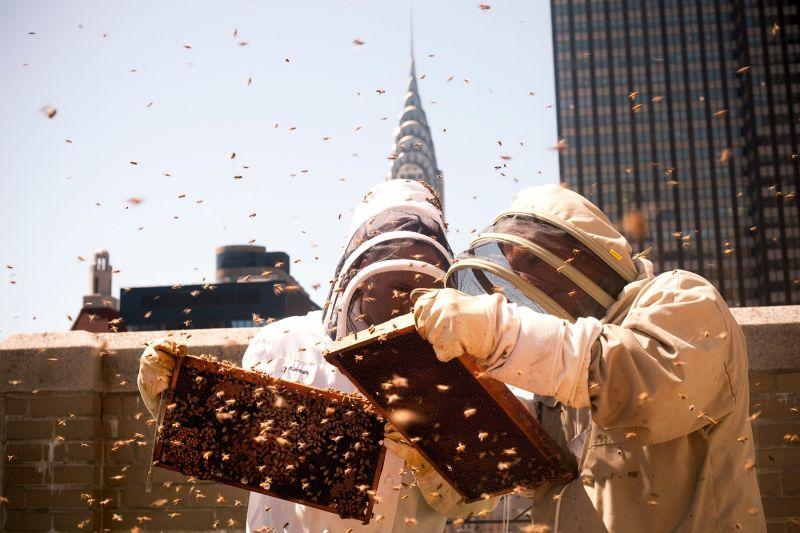 4 razlogi, zakaj vsi govorijo o urbanem čebelarstvu