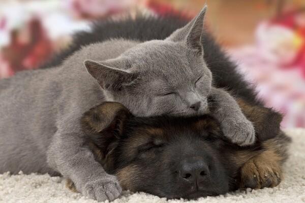 9 dejstev o vašem psu ali mački, ki jih niste poznali