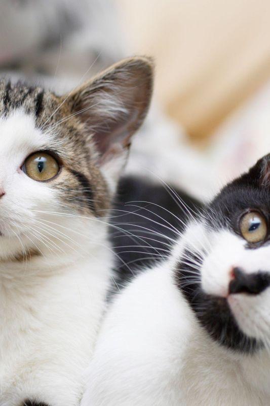 Aplikacije za pametno sobivanje z vašim mačjim prijateljem