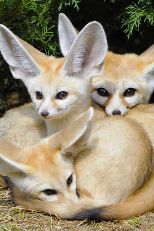 Bi se strinjali, da je to 6 najbolj prikupnih živalic na svetu?