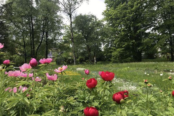 Na mednarodni dan čebel gremo v Botanični vrt na kavo in palačinke
