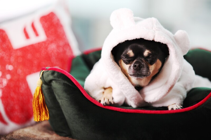 Pokukajte v najbolj prestižne pasje in mačje hotele na svetu