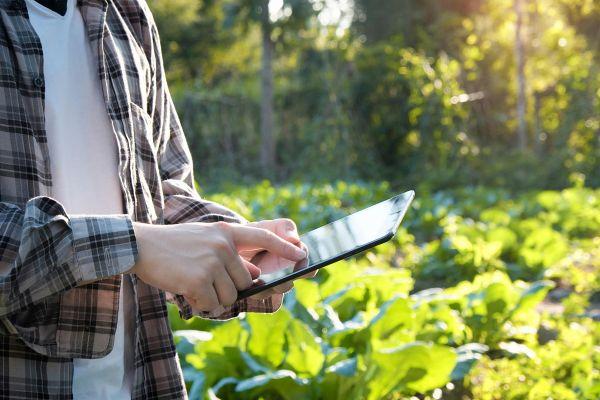 Preverjene aplikacije za urbane vrtnarje